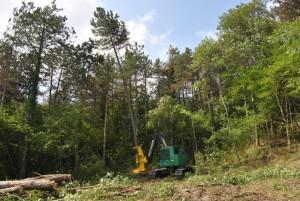 manutenzione-aree_boschive