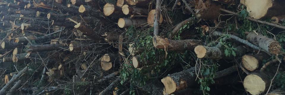 Dal legno un futuro sostenibile